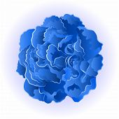 picture of blue rose  - Blue rose beautiful rose simple  symbol  of love vector illustration - JPG