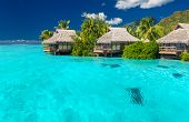 picture of beach hut  - Overwater villas in tropical lagoon of Moorea Island with coral reef - JPG
