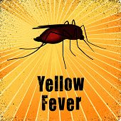 picture of mosquito  - Yellow Fever - JPG
