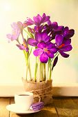 Постер, плакат: Bouquet of crocuses on bright background