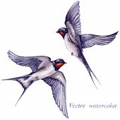 picture of swallow  - Watercolor two flying swallows isolated on white background - JPG
