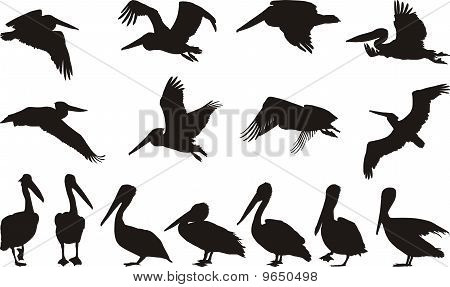 Pelican Silhouettes - Vector.eps