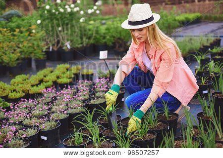 Female gardener replanting green seedlings or flowers