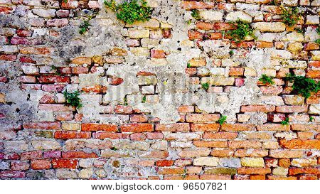 Decay Brick Wall And Plant Horizontal In Burano