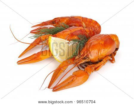Boiled crawfishes with lemon slice and dill. Isolated on a white background