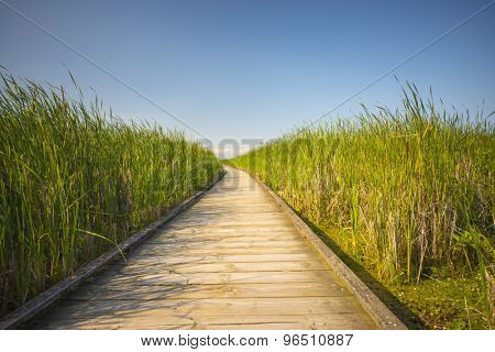 Wooden board walk on Pelee point conservation area, Ontario, Canada