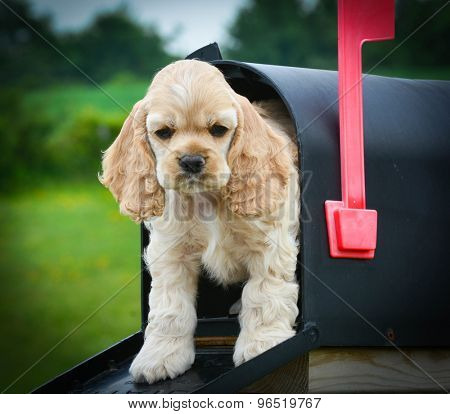 special delivery - cute puppy peeking out of a mailbox