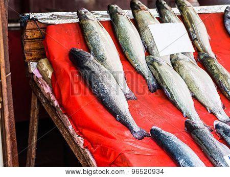 Fresh seafood  in fish market
