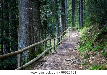 ForesFootpath Enclosed By A Wooden Fence