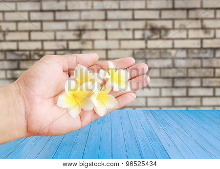 Tropical Plumeria Flower In Hand Holding With Wooden Background