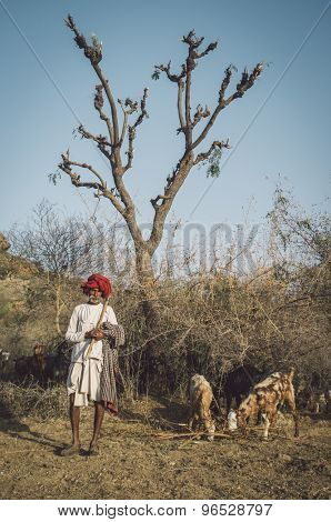 GODWAR REGION, INDIA - 13 FEBRUARY 2015: Rabari tribesman holds traditional ax on field and stands close to herd. Post-processed with grain, texture and colour effect.