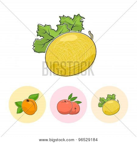 Fruit Icons, Melon ,peach, Apricot