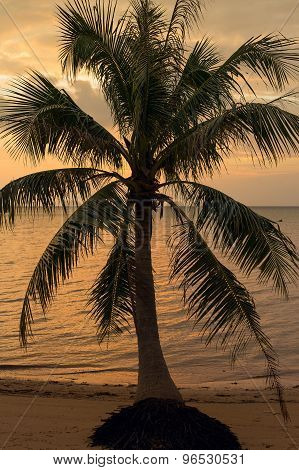 Coconut Palm Tree Silhouette At Sunset In Thailand