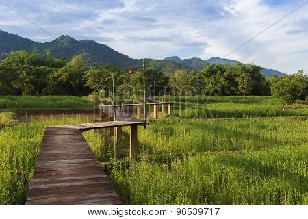 Wooden bridge on green rice field