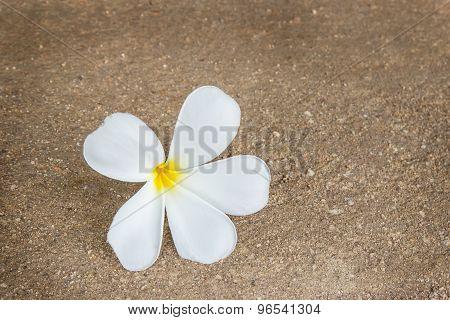 Tropical Plumeria Flower On The Floor