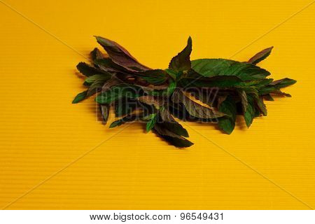 Mint On Yellow Background