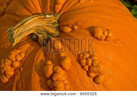 Textured Pumpkin