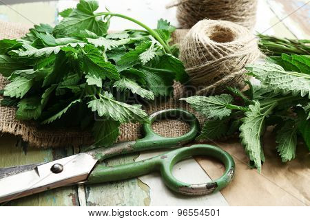 Leaves of lemon balm with rope and scissors on sackcloth, closeup