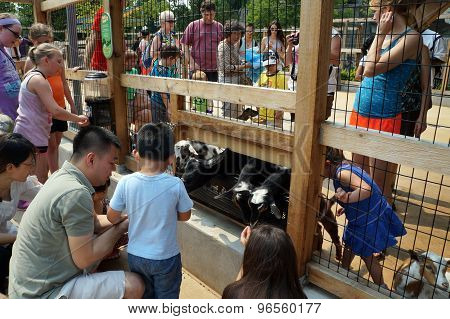 People Interacting with Goats