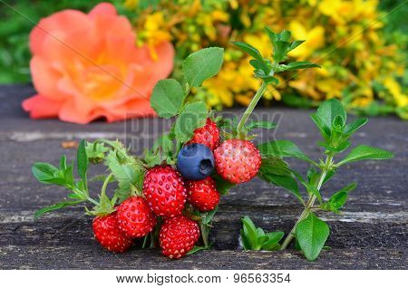Scented Plants And Fruit