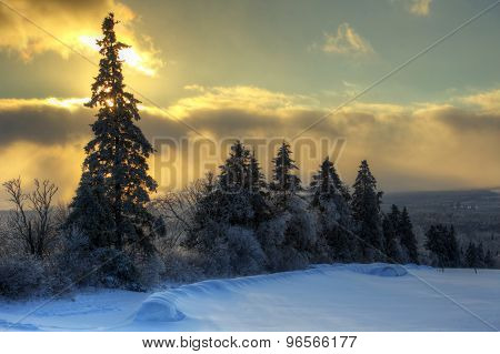 Hdr Tree Line Snow Sun Sky