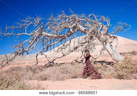 Flamenco And Dead Tree
