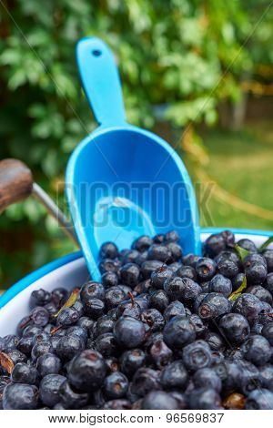 Blueberries in a bucket on a wooden table. Selective focus