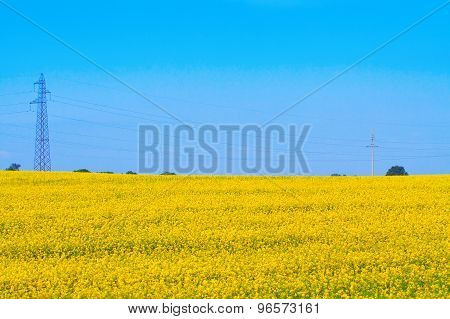 Transmission Tower Amongst Flowering Rapeseed Fields