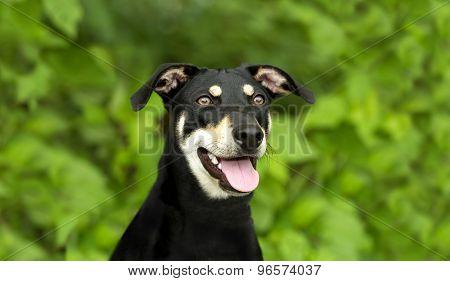 Dog Happy