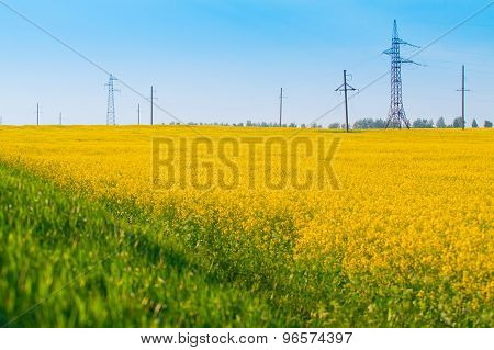 Field Of Canola And Power Transmission Line