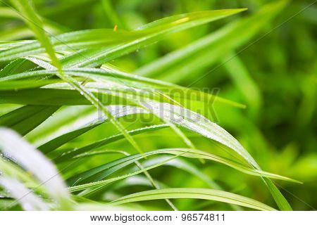 Spring Green Grass With Dew