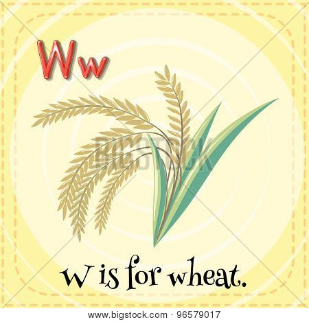 Flashcard of alphabet W is for wheat