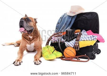 Beautiful Boxer Dog with open suitcase isolated on white