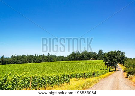 Dirt Road In Vineyard