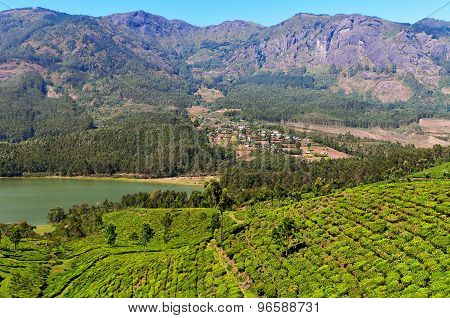 View Of Tea Plantation Valley And Madupetty Dam In Munnar