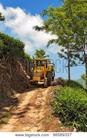 Tractor With Tea Leaves At Tea Plantation After The Working Day