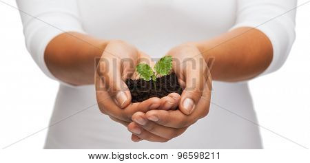 fertility and nature concept - closeup of woman hands holding plant in soil