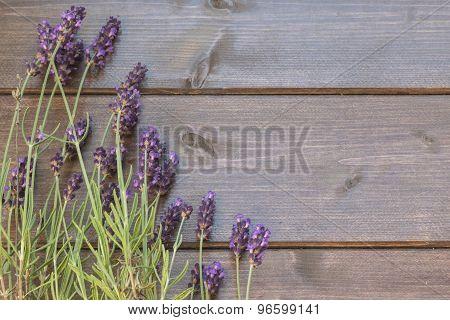 Lavender Flowers Rural