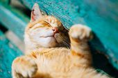 pic of puss  - Red kitten cat sleeps on a bench in park in hot summer day - JPG