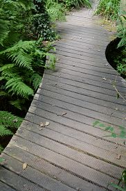 stock photo of marshlands  - Curved wooden path winding its way through marshland. ** Note: Shallow depth of field - JPG