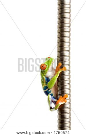 Frog Climbing On Metal Isolated On White