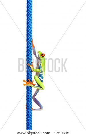 Frog Climbing Up Rope Isolated On White
