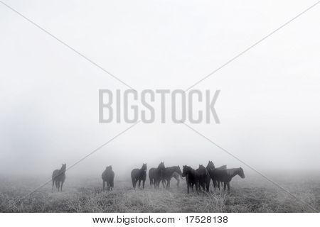 Horses on a foggy day in winter, on the prairie. contains noise at full size