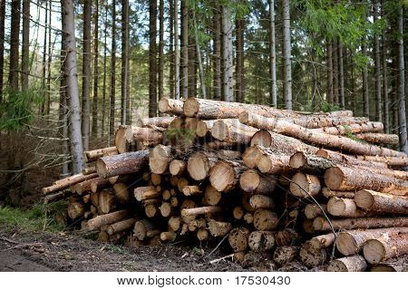 A pile of logs recently harvested