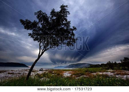 A lone tree on a Norwegian costal landscape