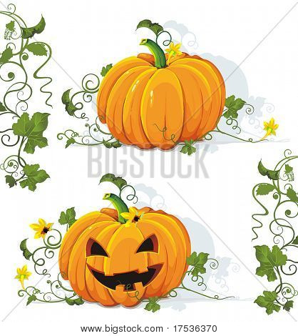 Vector tasty and healthy vegetable pumpkin. Classical natural illustration.
