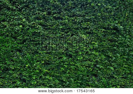 Thick green garden hedge pattern
