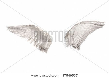 zwei Flügel, isolated on white background