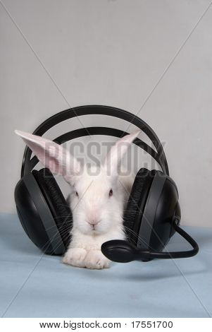 Small white rabbit with headset