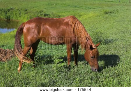 1 Brown Horse Ex01